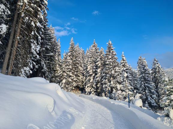 Davos Wald