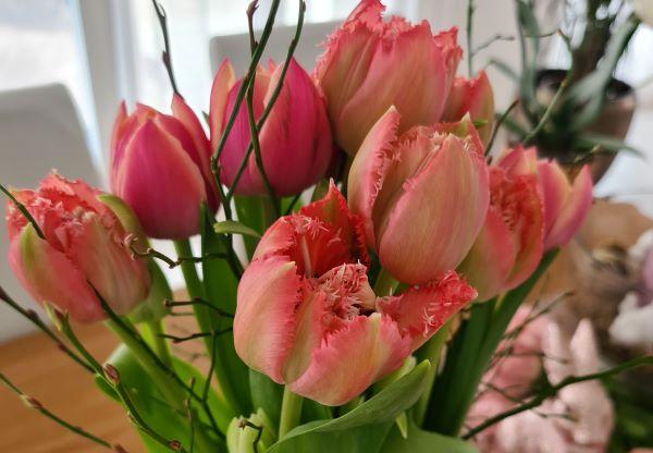 Tulpen Daheim